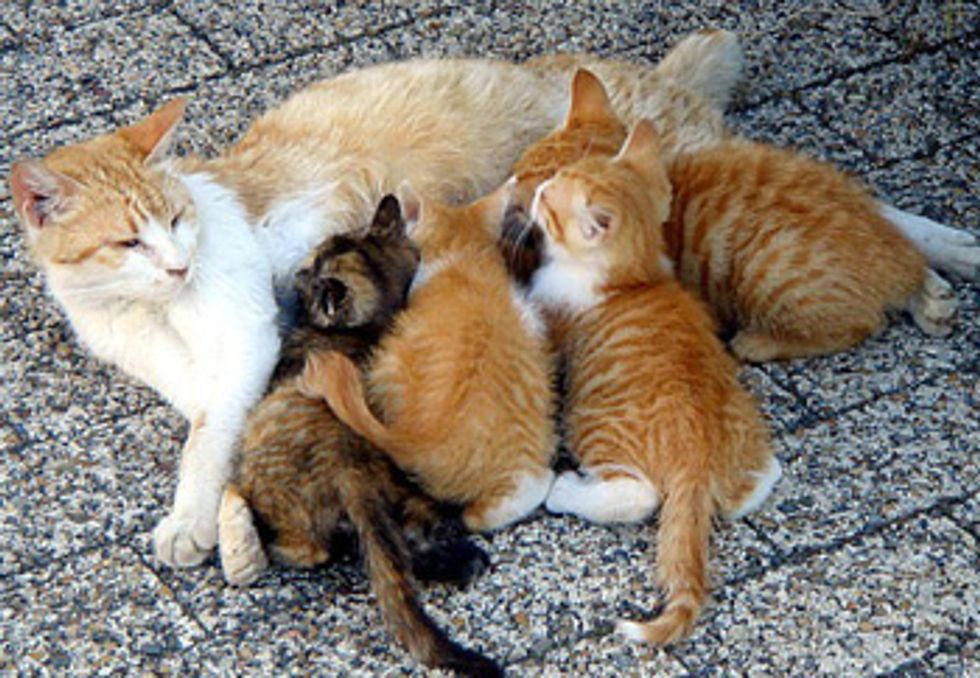 How to Care for New Born Kittens
