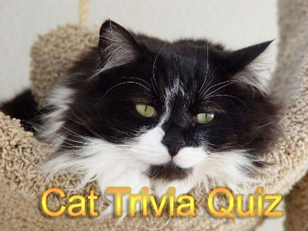 Cat Trivia Quiz