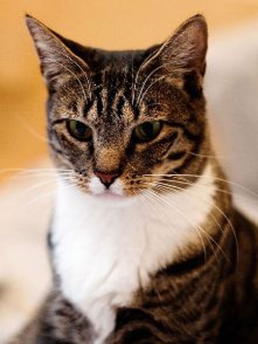 Exterminators Hired for Trap-Neuter-Return, 20 Cats Found in an Abandoned House