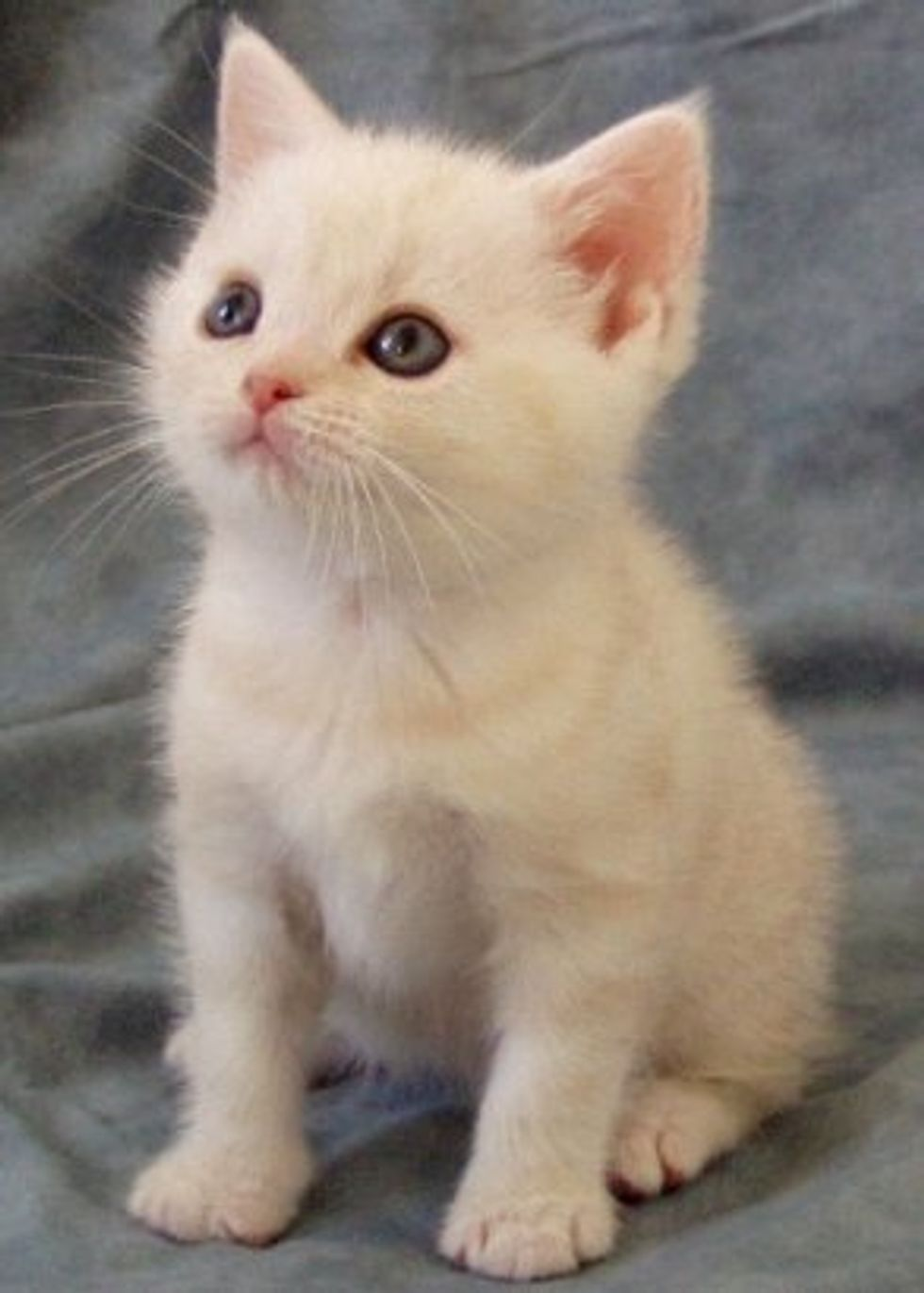 Tips on Recusing Kittens and Care for Orphan Kittens