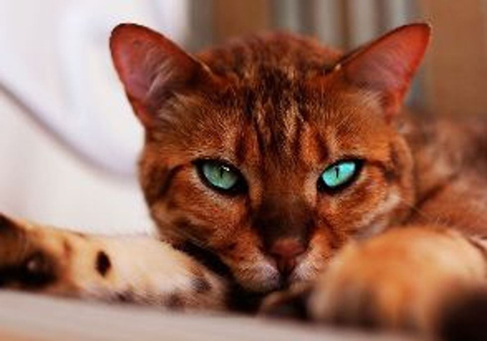 Survey: Recession is not Affecting Pet Owners' Love for Cats