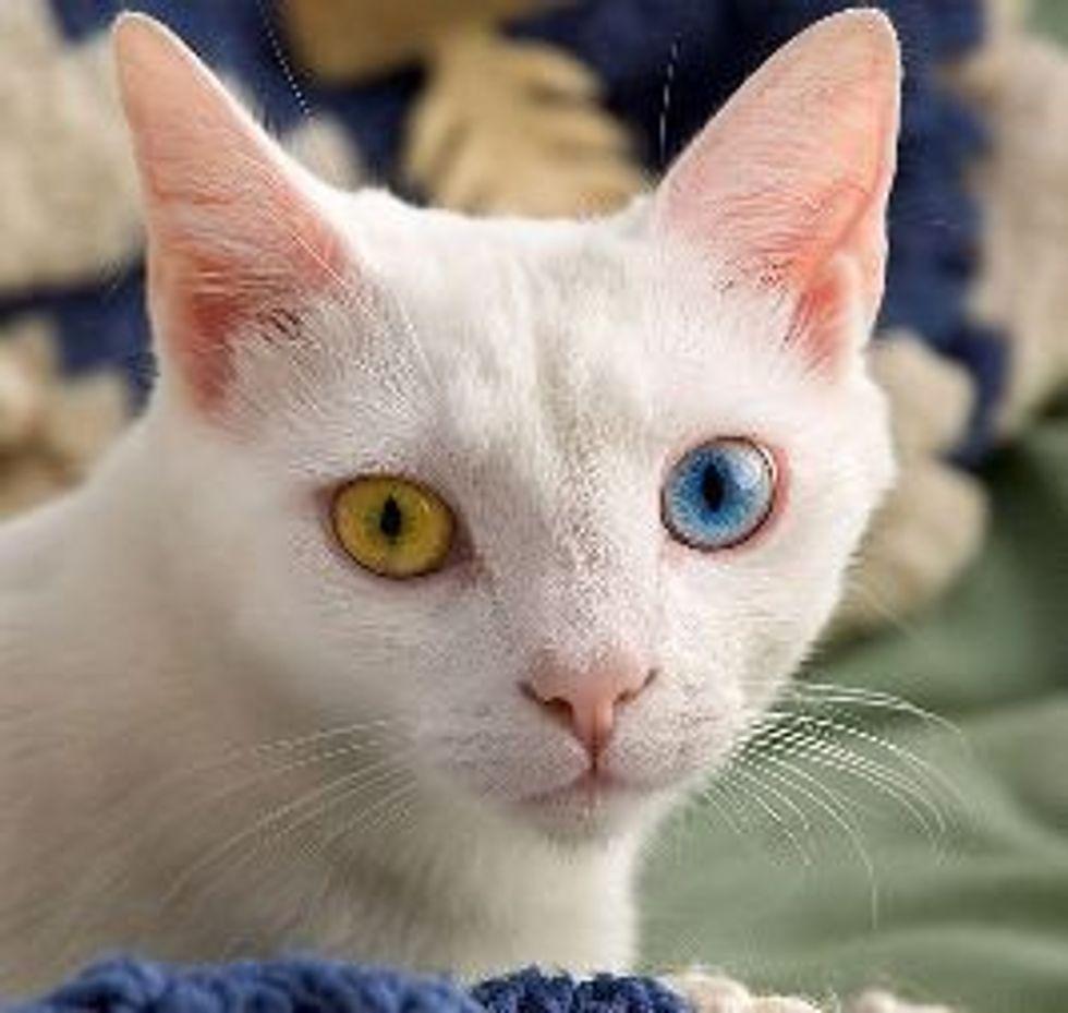 Do Kittens' Eye Color Change?