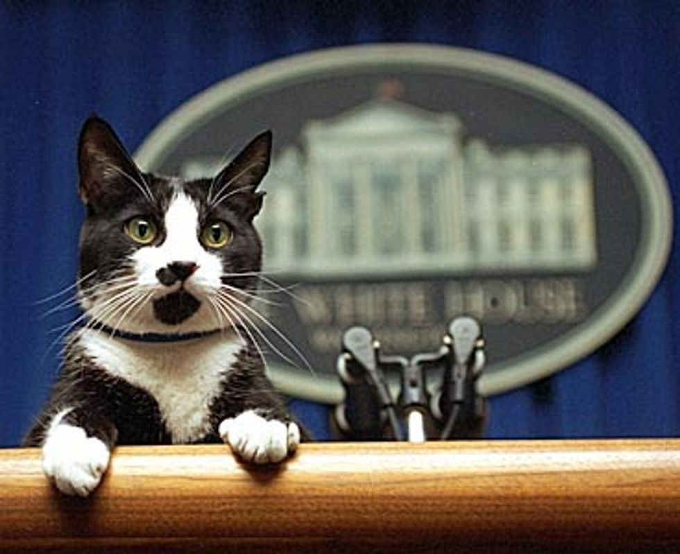 Former President Cat's Ashes Returned Home