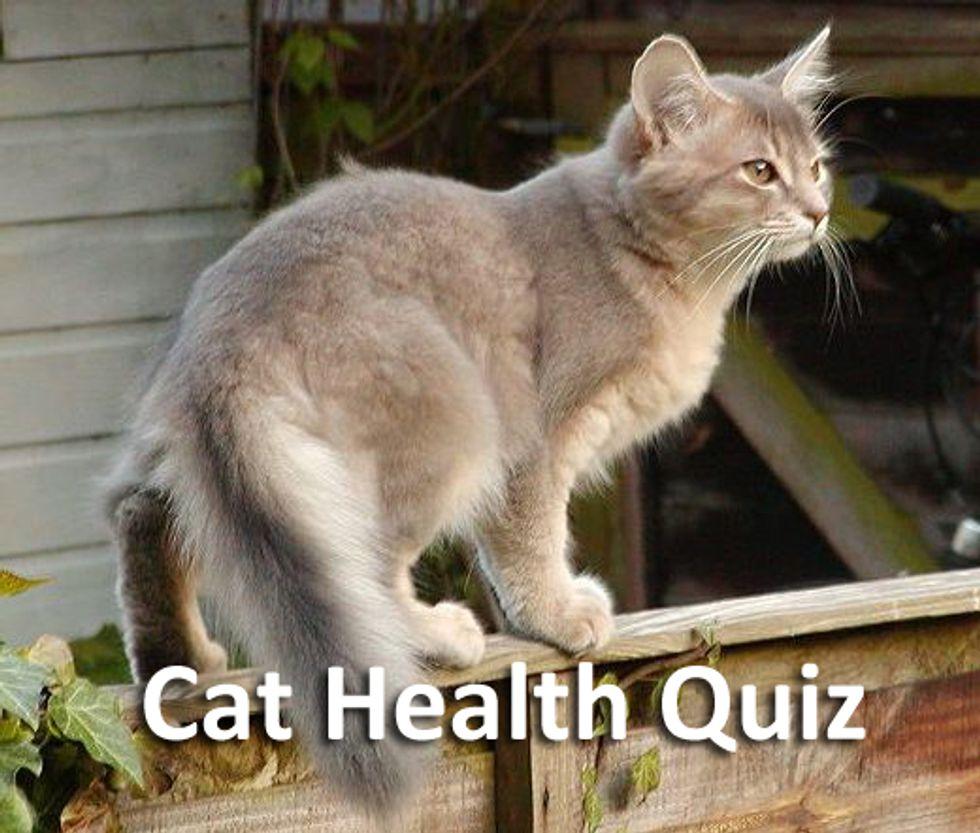 Cat Health Quiz
