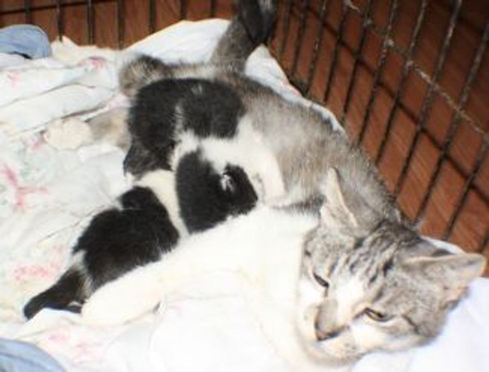 Kittens Saved from Blazing Clarenville Dump