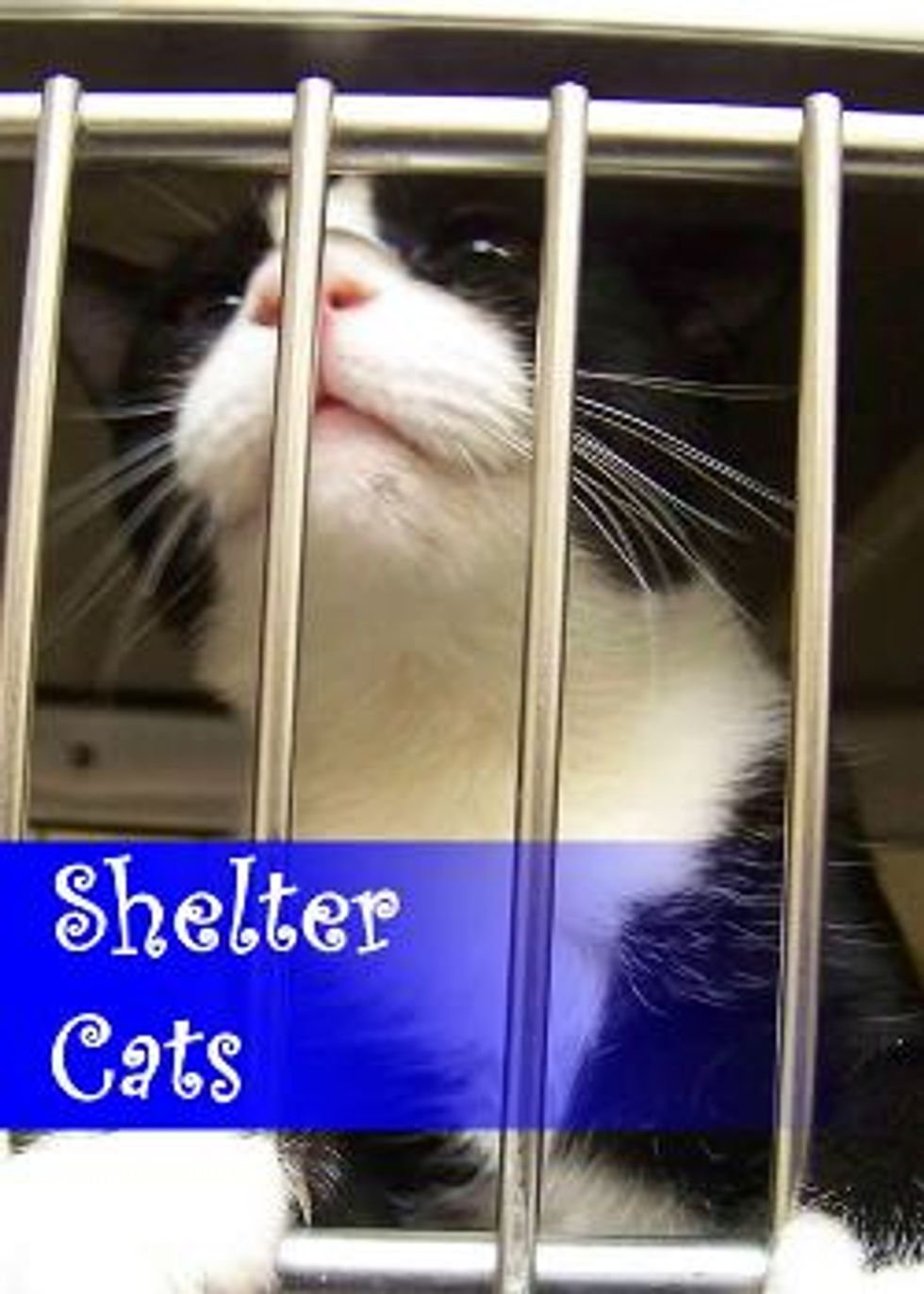 Junior Volunteers Learning Valuable Lessons at the Shelter