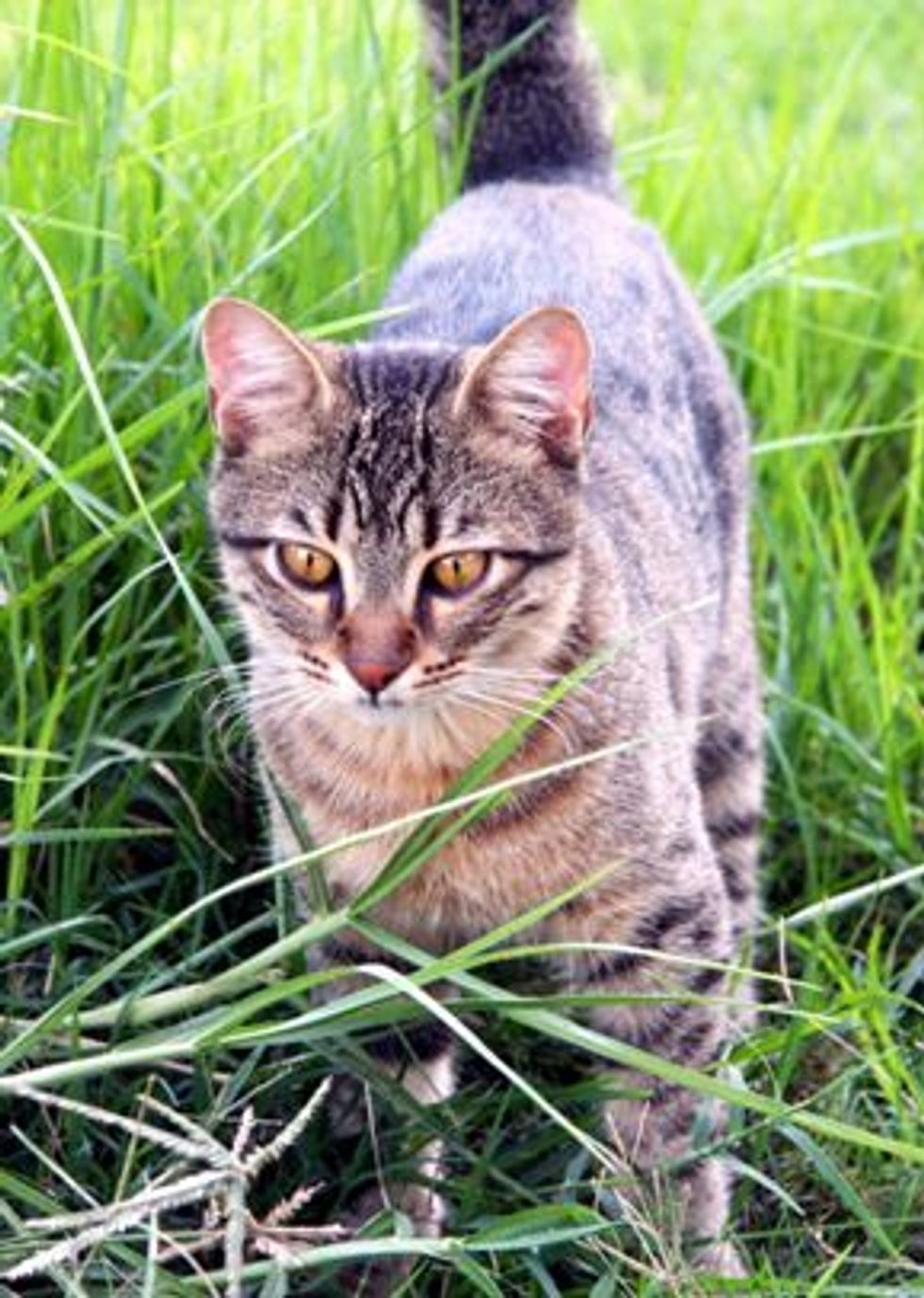 Cats Offensive or Defensive Behavior