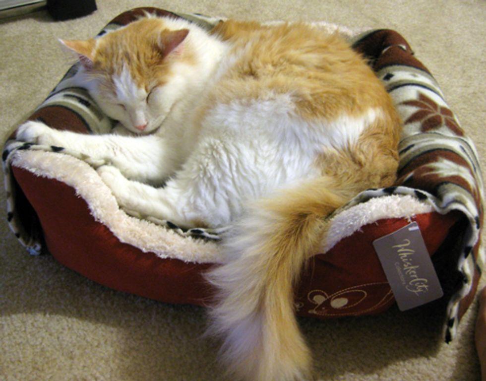 Where do Your Cats Sleep