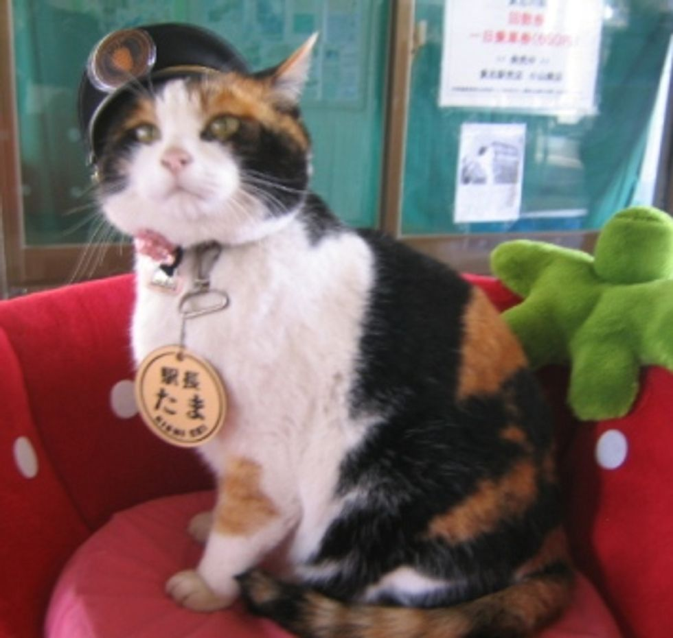 Japnese Calico Cat - an Inspiration to Railways in this Economy