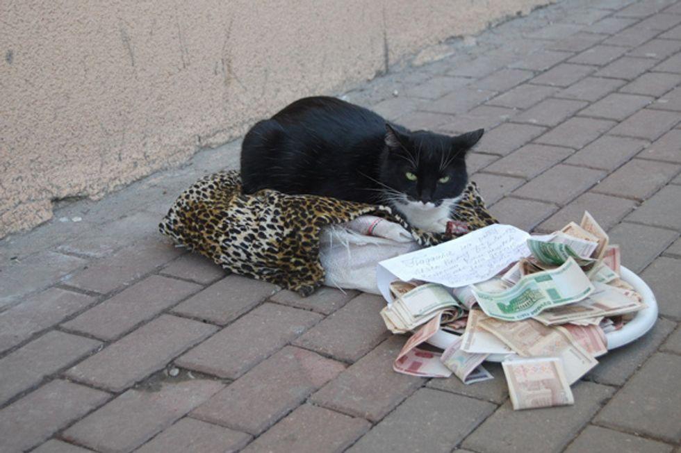 Russian Begging Cat