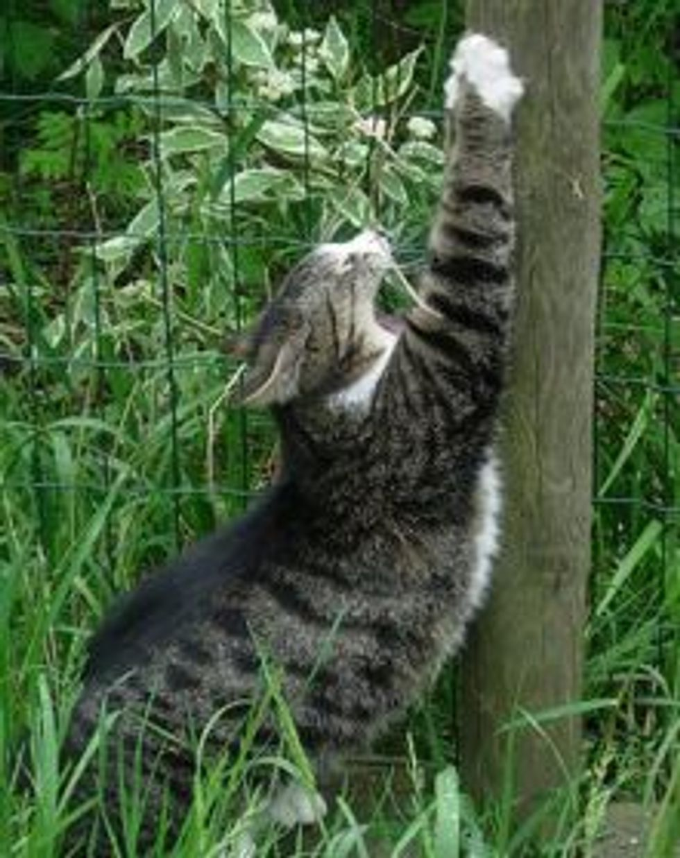 Why do Cats Scratch so Much?