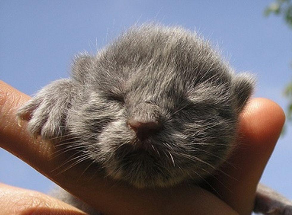 How to Bottle Feed a Newborn Kitten