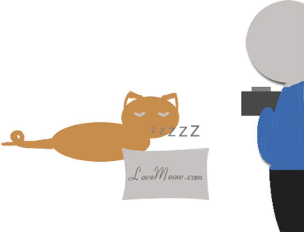 Cat Sleeping Pose Photo Contest