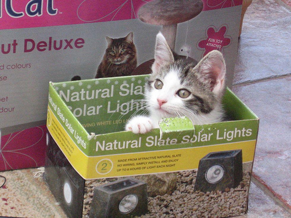 Video: Kitten in the Box!