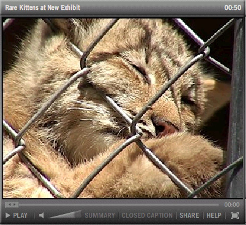 Penny Drive Helped Bring Rare Lynx Kittens to Wildlife Center