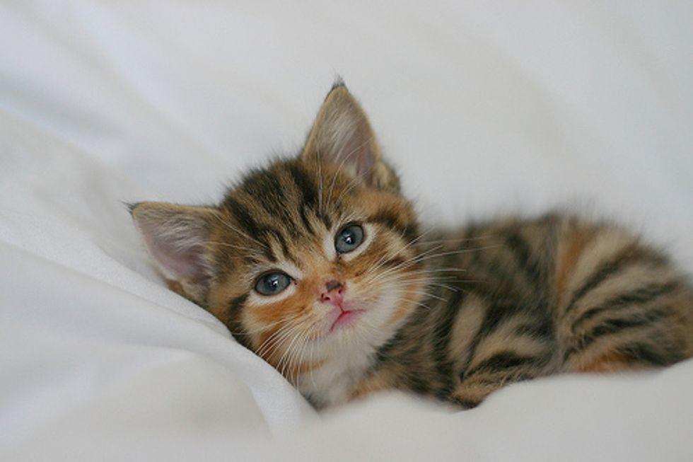 Kitten Quiz: The First Day Onwards