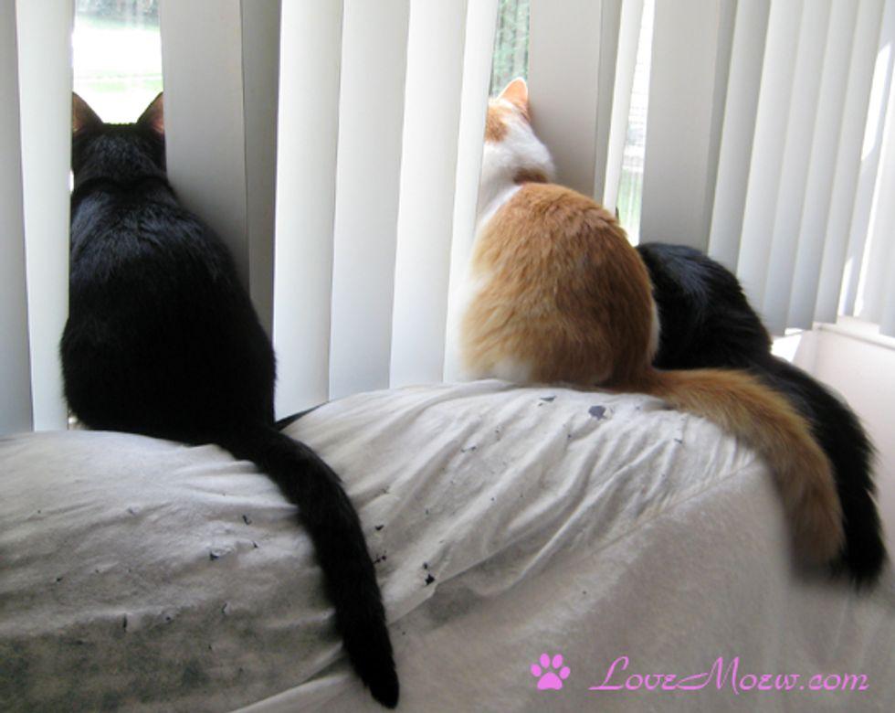 Cats' Favorite Pastime: Bird TV