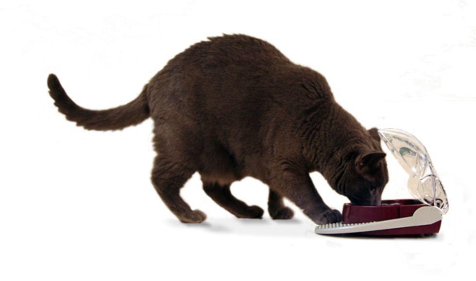 Cat Flip Bowl