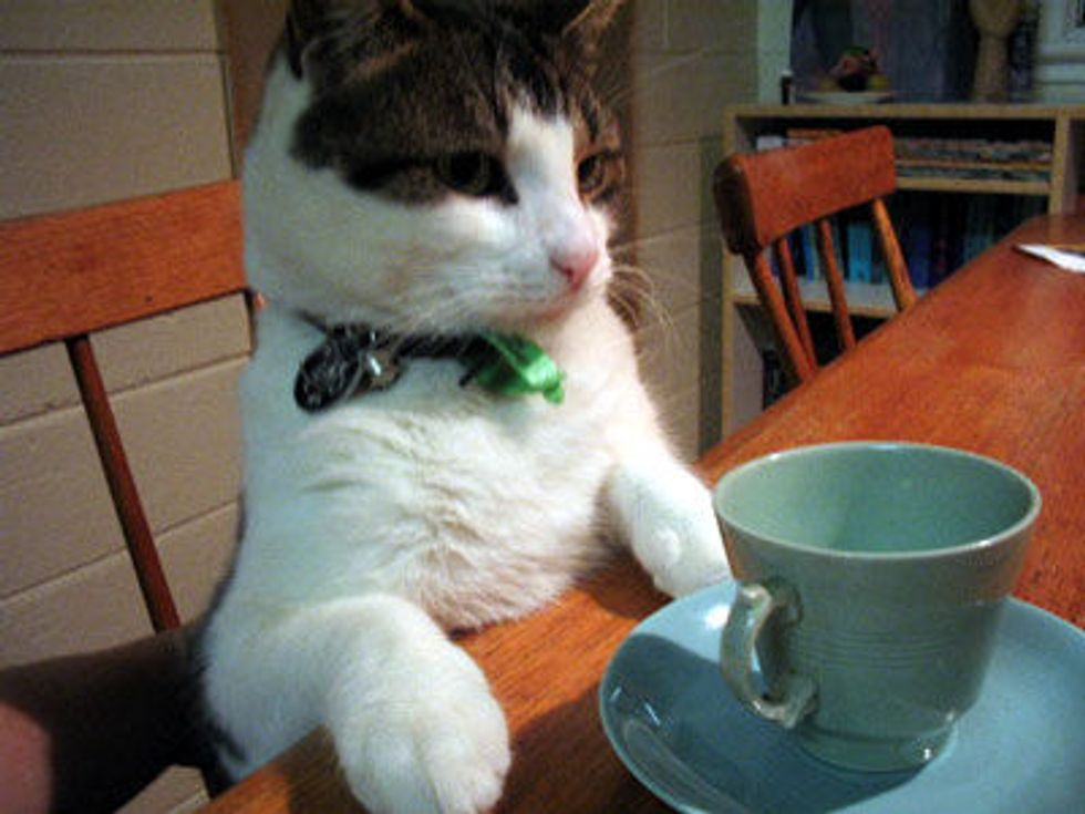 Video: Cat Fights Glass of Tea