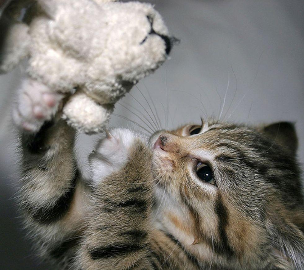 Video: Kitten Attack :-)