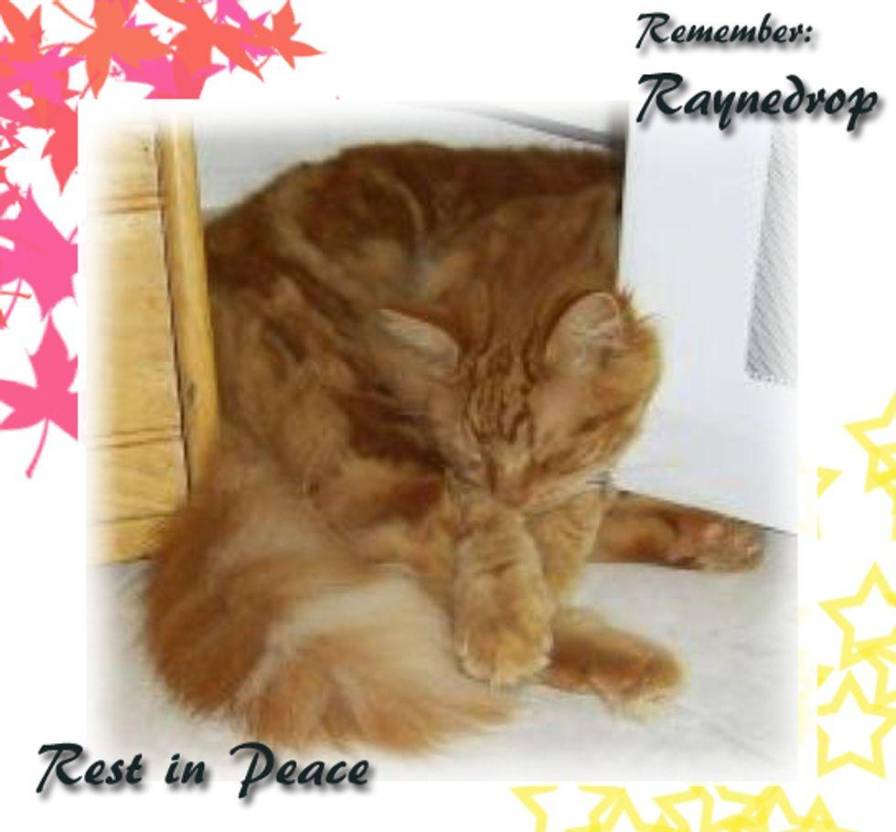 Raynedrop - R.I.P.