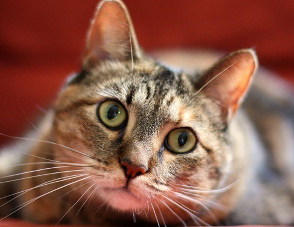 Five Common Cat Ailments
