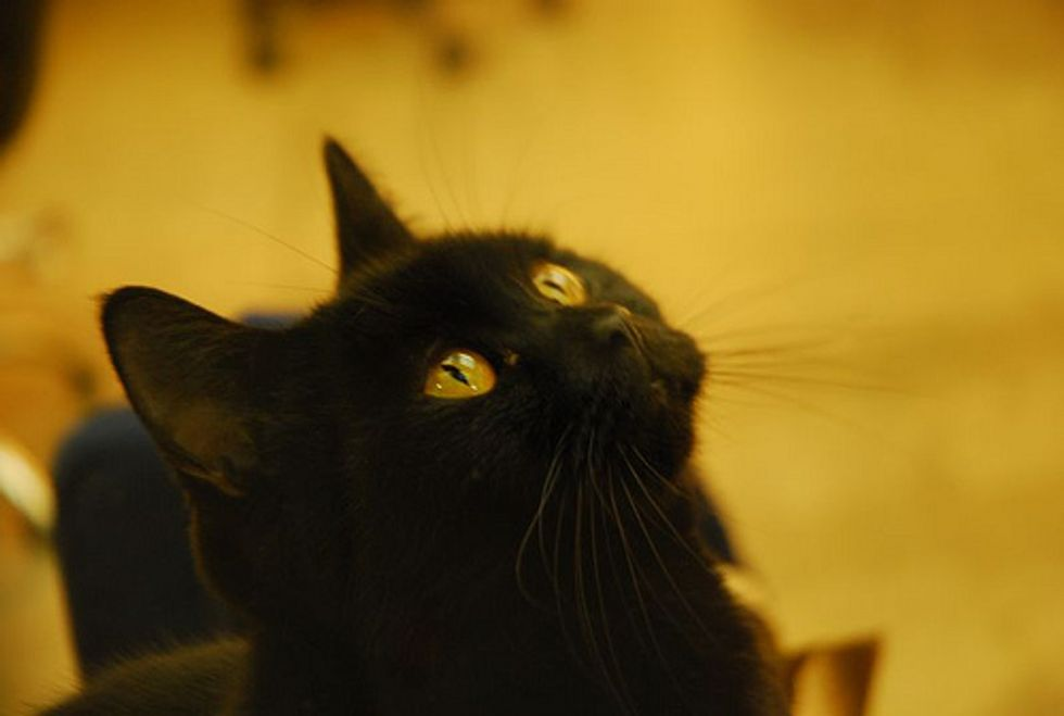 Featured Story: Our First Cat Wambli