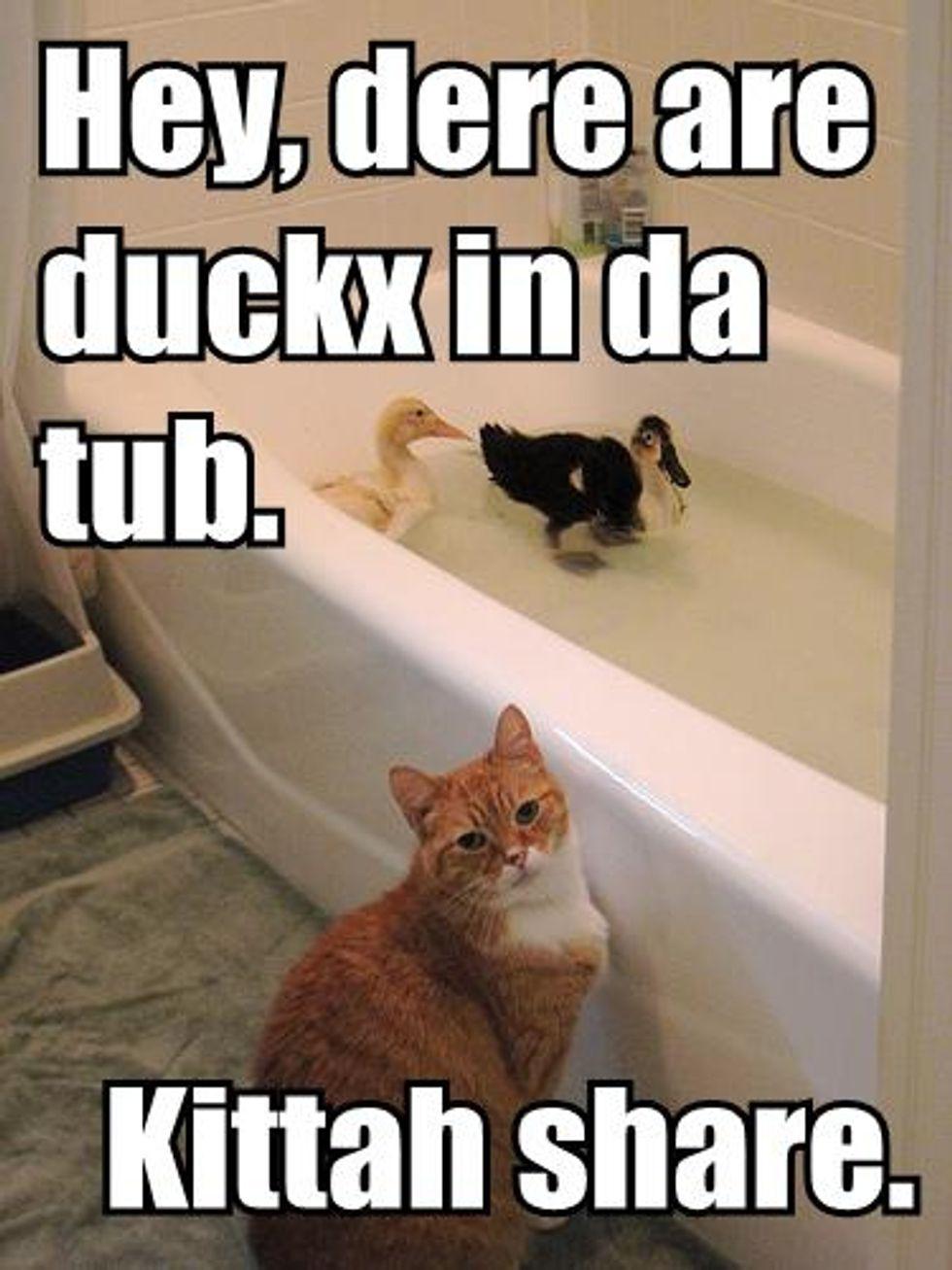 Video: Bengal Kitten Tub Duck Hunt
