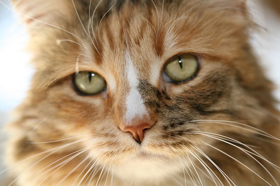 Tips on Grooming Your Cat
