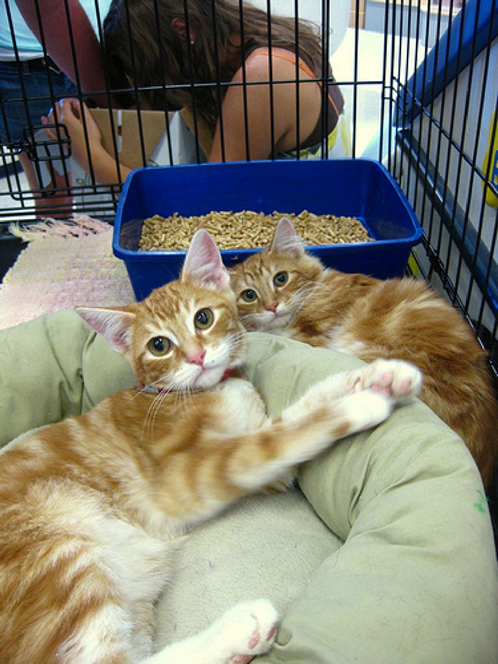 10 Good Reasons to Take in a Shelter Cat