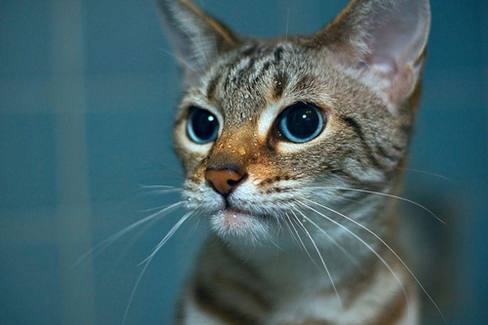 Video: Sink Kitten :-)