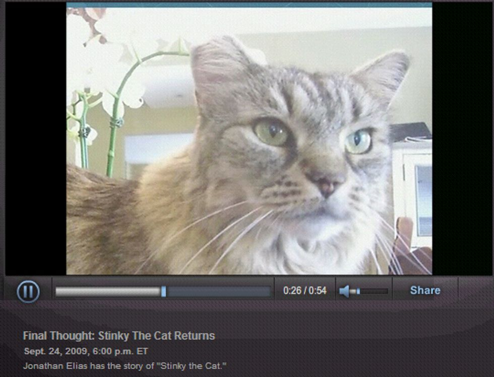 Stinky, the Cat with 8 Lives
