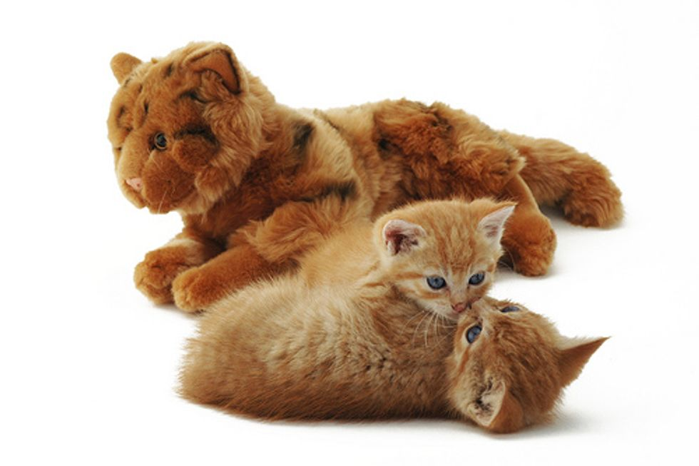 Video: Simon's Cat 'Hot Spot' by Simon Tofield