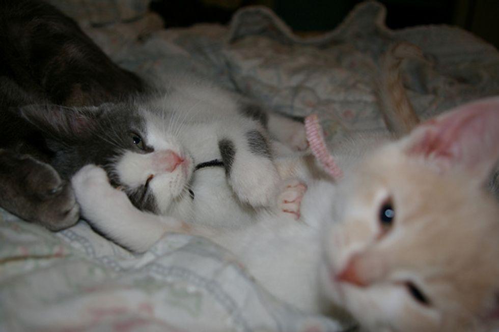 Video: Playful Kitten Fight