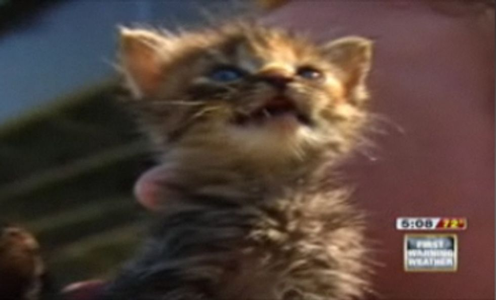 10 Baby Kittens Rescued from Missouri River