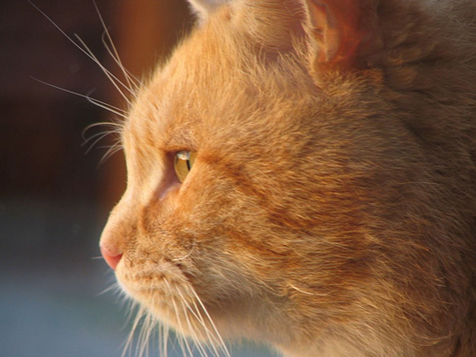 Featured Cat Story: Millie