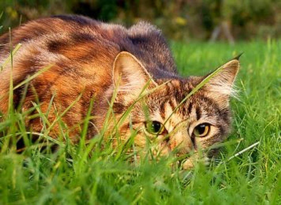 5 Senses: Cats vs. Humans