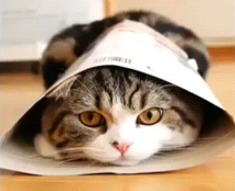Video: I am Maru - The funniest cat on the planet