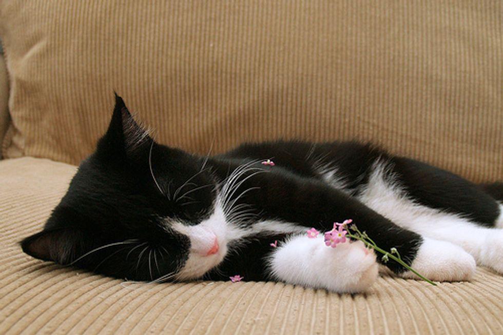 Video: Kitten Falling Asleep
