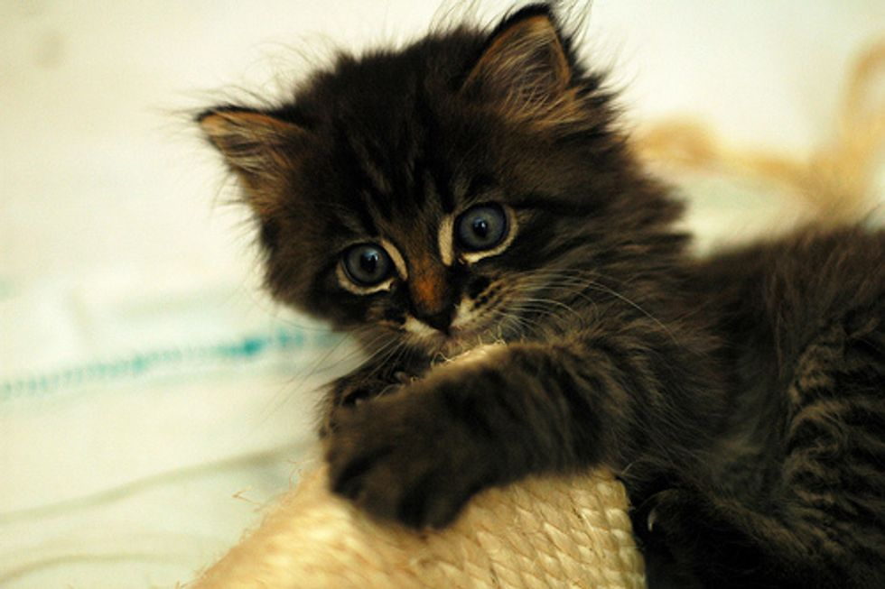 Video: Clingy Kitten
