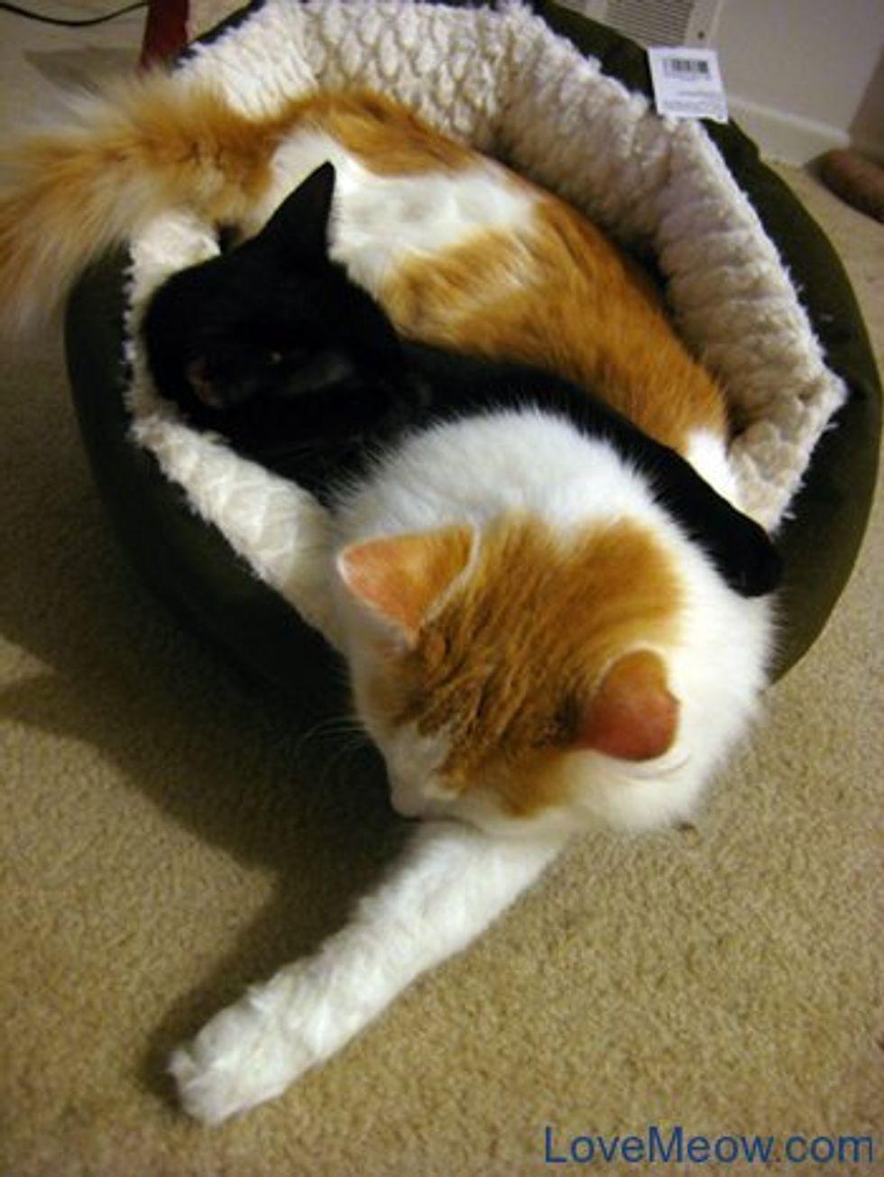 Cute Sleeping Tactics