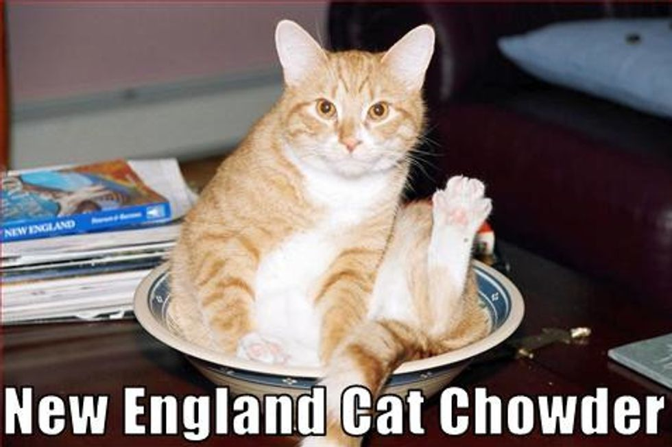 Cats and Bowls