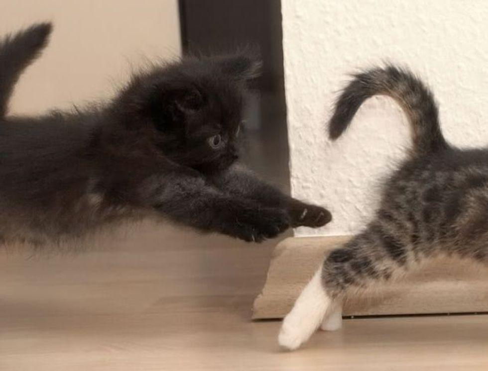 Video: Kitten Wants Noms