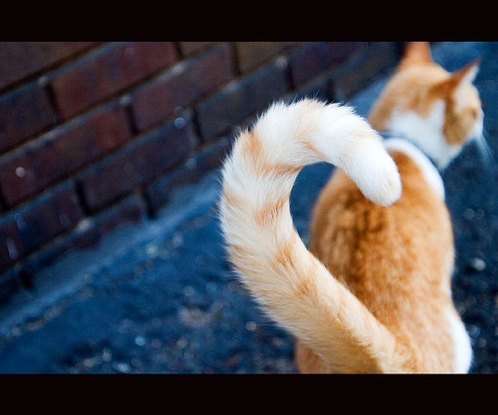 How to Read Your Cat's Tail Language?