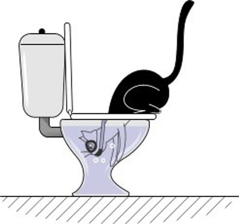 What Cats Do When Looking Inside the Toilet