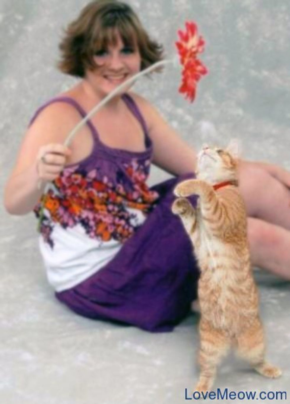 Featured Cat Pictures