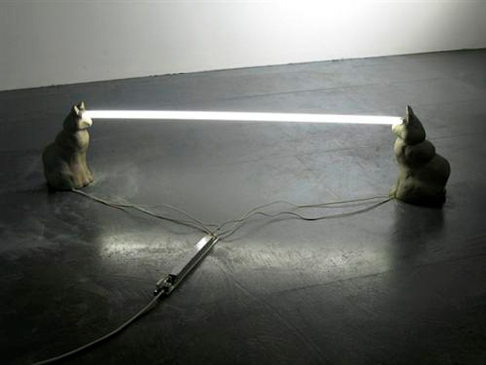 Staring Cats with Laser Beam Eyes