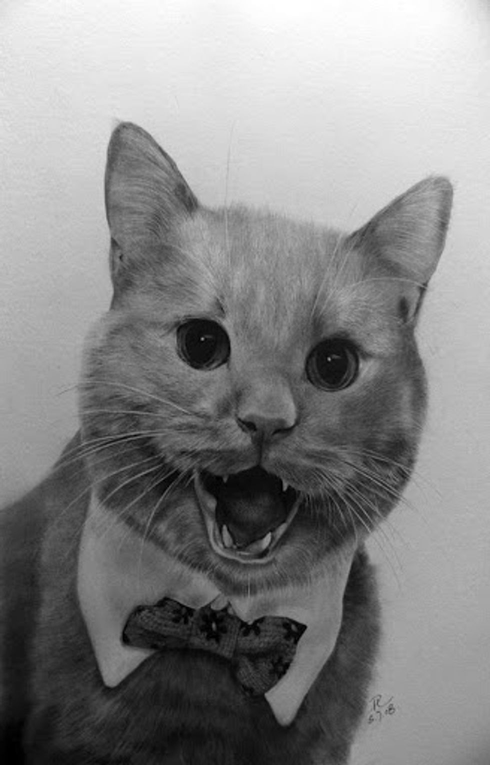Amazing Pencil Drawings of Cats