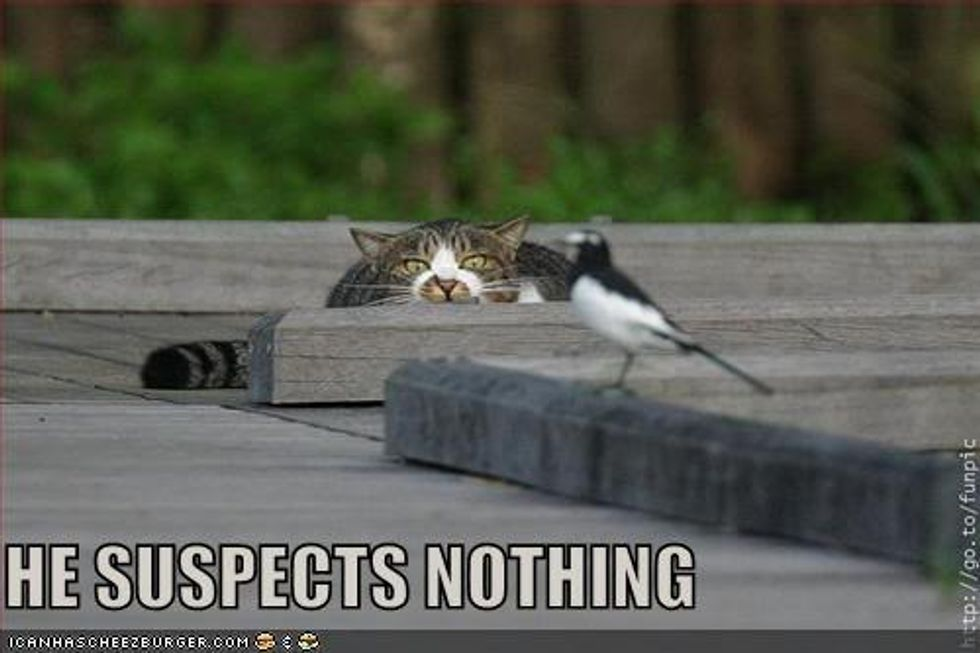 Caturday: Cats and Birds