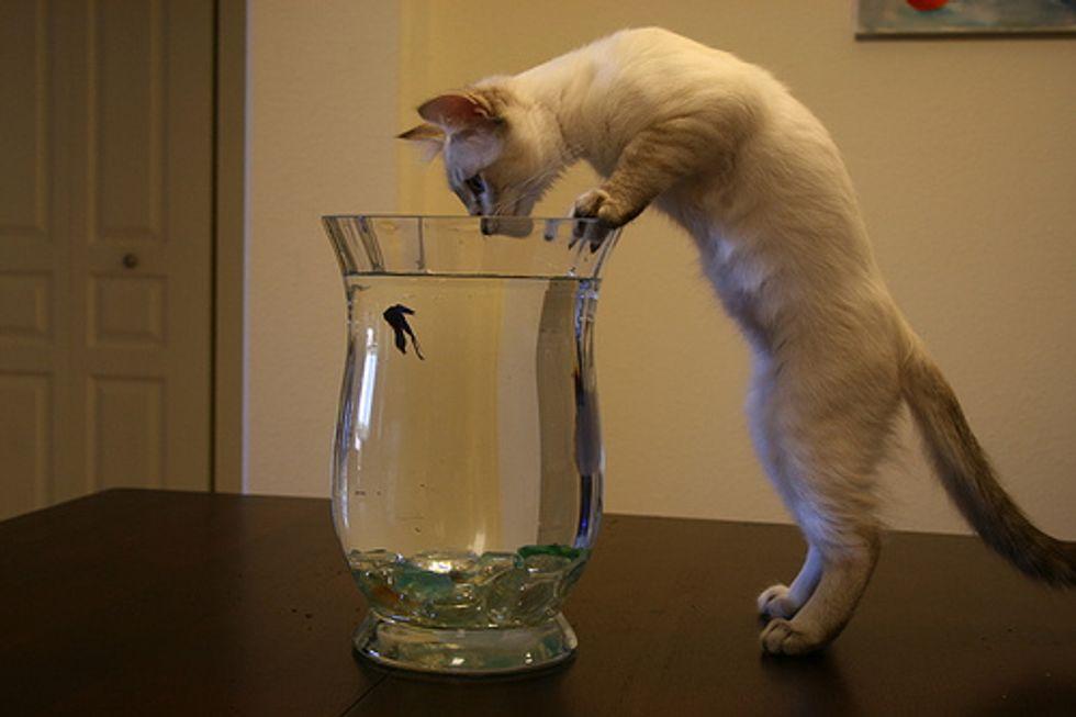 Video: Kitten Fun in a Fishbowl